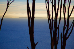 Silhouette trees & shoreline at Discovery Park -7W8A3314